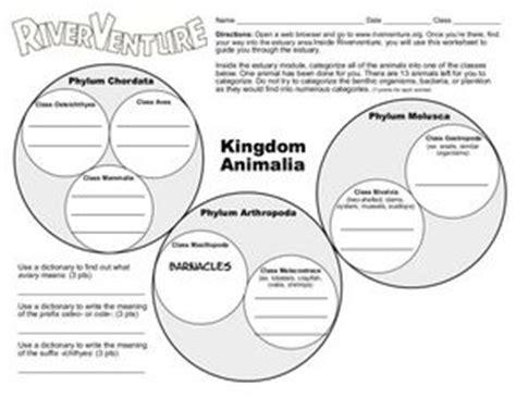 kingdom animalia   grade worksheet lesson planet