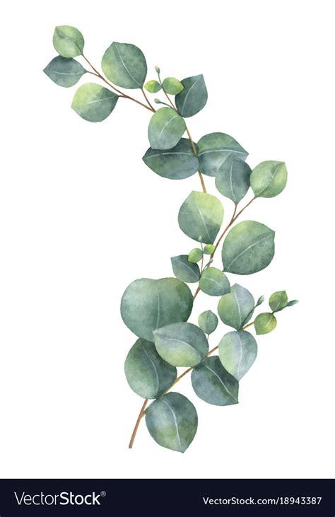 watercolor wreath  green eucalyptus royalty  vector