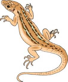 HD wallpapers coloring pages lizards