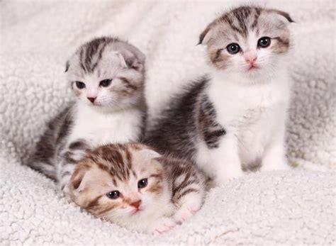 how do cats live how long do cats live proquestyamaha web fc2 com