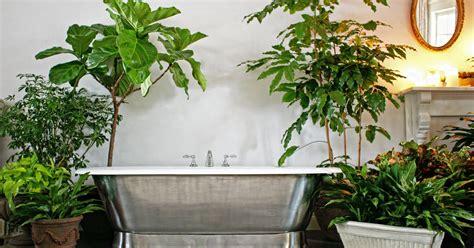 Pflanzen Im Badezimmer by Pflanzen F 252 Rs Badezimmer Mein Sch 246 Ner Garten