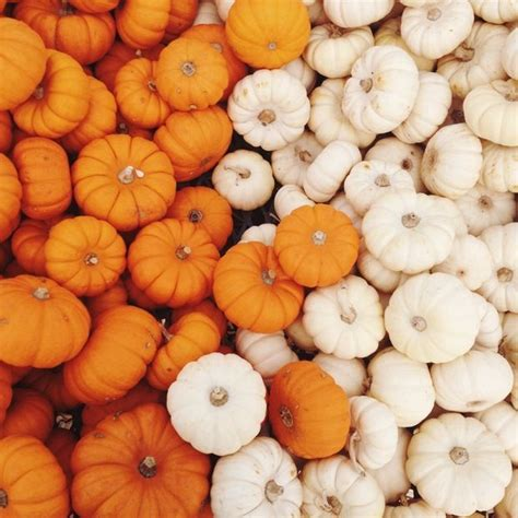 Fall Backgrounds Vsco Desktop by Pumpkin Patch S E A S O N Fall Background Fall