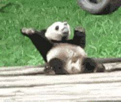Dancing Panda GIFs - Find & Share on GIPHY