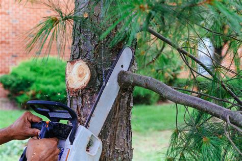 tree trimming endurance lawn care