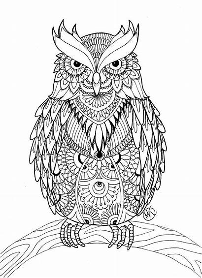Owl Coloring Pages Adults Detailed