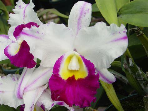 orquideas familia feliz joven