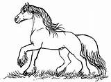Gypsy Coloring Horse Drawing Designlooter Horses Horse6 Fairy Stacey Mayer sketch template