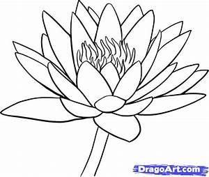 How To Draw A Water Lily  Step By Step  Flowers  Pop