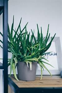 Pflanzen Wenig Licht : der pflanzen guide 15 stylische und pflegeleichte zimmerpflanzen ~ Markanthonyermac.com Haus und Dekorationen