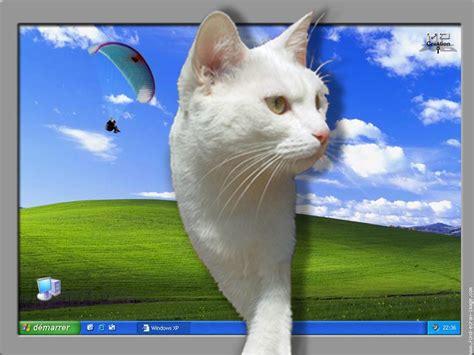 fond d ecran qui bouge gratuit pour pc desktop background fond d ecran ordinateur telecharger