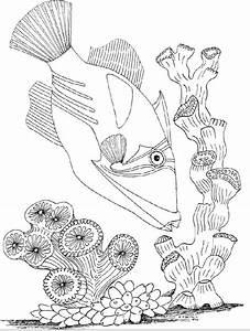Ocean Underwater Coloring Marine Fish Corals And