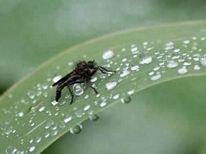 Was Mögen Mücken Nicht : warum werden m cken nicht nass ~ Frokenaadalensverden.com Haus und Dekorationen