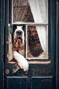 84 best images about english mastiffs and other large With mastiff dog door