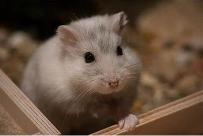 Hamsters Poop Why Throw Fish Privacy Pets