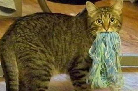 hacks     cat owners life easier