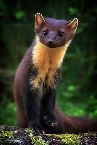 3491 best images about Interesting Animals! on Pinterest ...