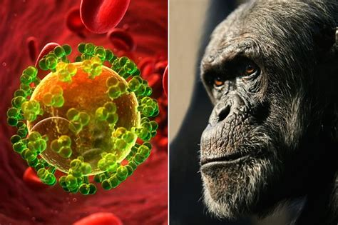First Aids Case Was In 1908 And Was A Chimpanzee Hunter In
