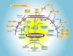 Функциональный риск при гипертонии