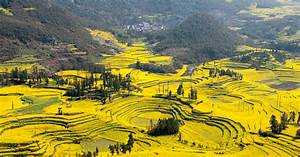 Canola Flower Fields, China 83 Unreal Places You Thought