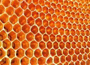 If Honey Is Bee Vomit, What Is Honeycomb? - Organic Authority  Honeycomb