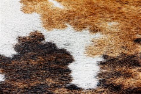 How To Cowhide by 5 Ways To Decorate Your Living Room With Cowhide Rugs