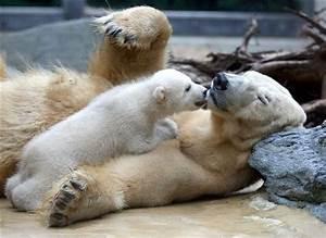 Incredible Photographs Of Polar Bear