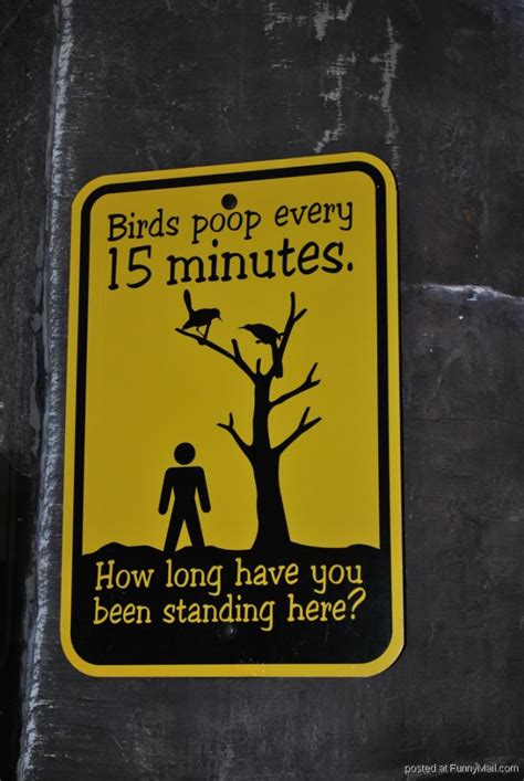 12 Funny Signs At Zoo!  Beware Of Birds. Song Signs. Typography Signs. Head Cold Signs. 5 Day Signs. Body Heat Signs Of Stroke. Norse Signs Of Stroke. Parkinson's Disease Signs. Foot Signs