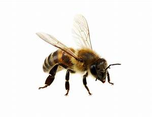 Wie Machen Bienen Honig : serie nur eine frage was machen denn die bienen im winter herr reichardt ~ Whattoseeinmadrid.com Haus und Dekorationen