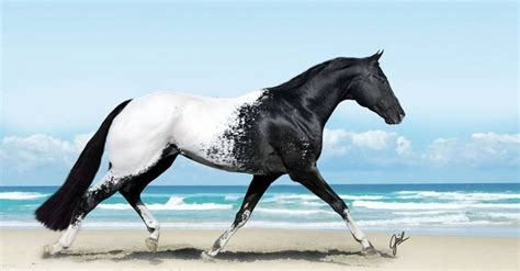 horses beauty most ever photographs