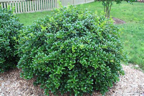 empire flooring orem utah best bushes 28 images organic tree shrub care bergen