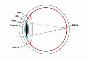 Our Human Eye Illustration For Descriptions The Anatomy  Read An But When You Consider How