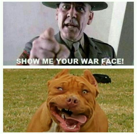 War Face Meme - quot i said show me your war face quot r lee ermey actor no not the koala funny pictaquotes