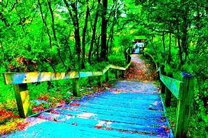 Intense Color Bike Trail and Nature Photos Page 1