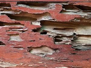 Produit Contre Les Termites : traitement anti termites curatif en martinique poux bois ~ Melissatoandfro.com Idées de Décoration