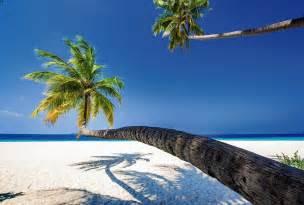 poster noir et blanc poster grand format palmier en trompe l 39 oeil paysage océan