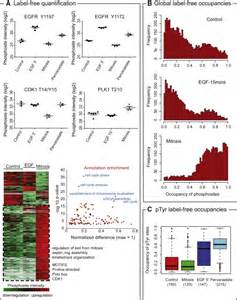 Ultradeep Human Phosphoproteome Reveals A Distinct