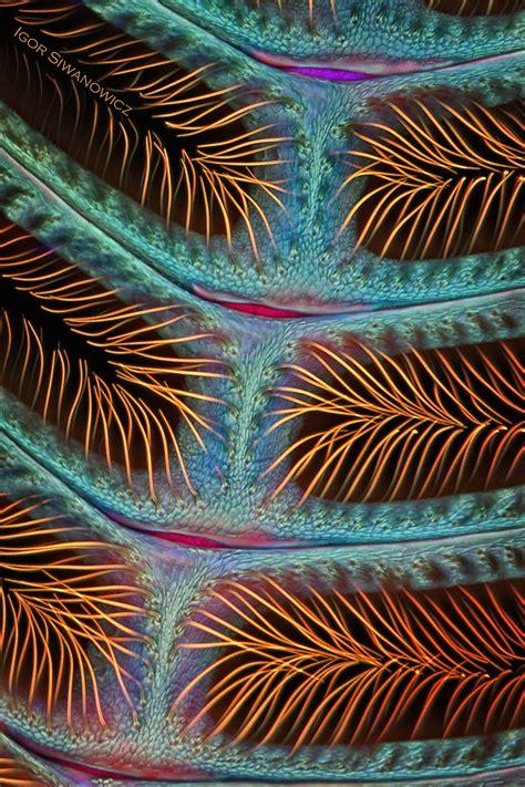 des micro details de petits animaux avec  microscope laser
