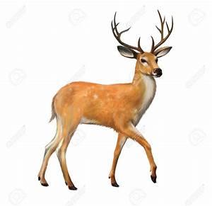 Deer clipart dear animal - Pencil and in color deer ...