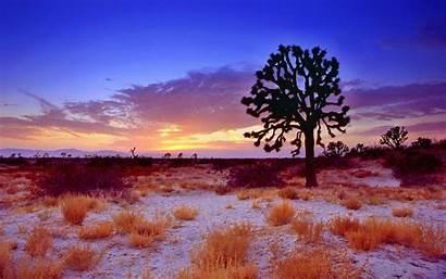 Sunset Desert Mojave California Tree Joshua Wallpapers