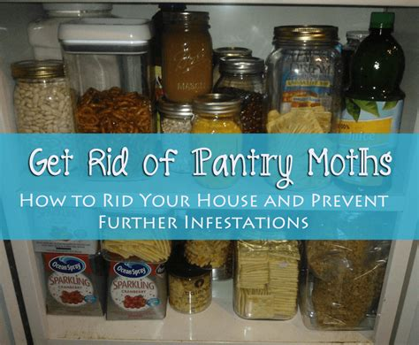 Get Rid Of Pantry Moths The Herbal Spoon