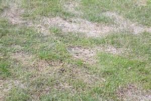 Rasen Wird Braun : rasenflecken so werden sie braune flecken im rasen los ~ Frokenaadalensverden.com Haus und Dekorationen