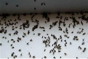 Produit Contre Les Moucherons : anti mouche maison que faire contre les mouches fruits le ~ Premium-room.com Idées de Décoration