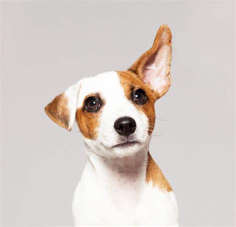 water    dogs ear cuteness