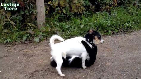 hunde gegen katzen zusammenstellung  youtube