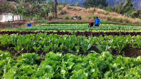 ระบบการเกษตรที่ยั่งยืน: เกษตรธรรมชาติ