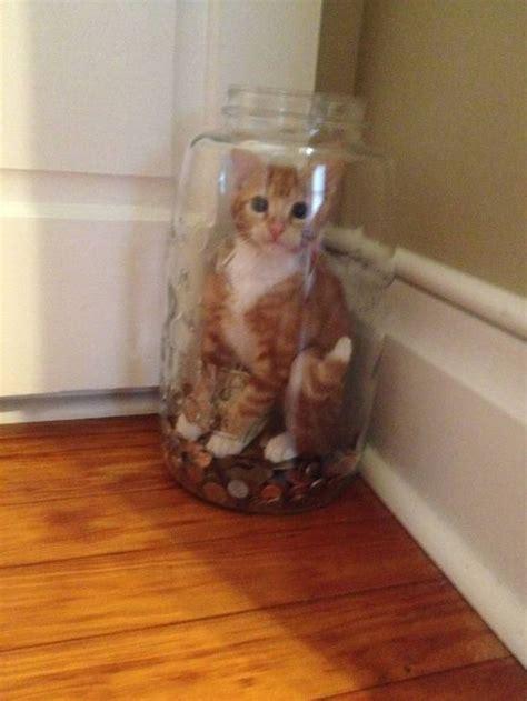 hilarious cats    mischievous moments