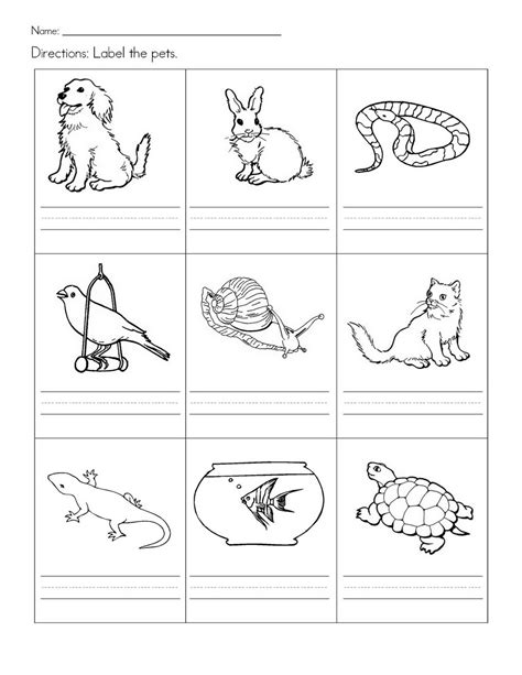 pet animals worksheet coloring pages