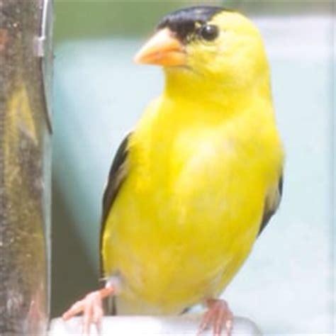 wild birds unlimited bird shops 6074 telegraph rd