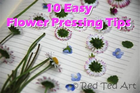 how to press flowers how to press flowers red ted art s blog