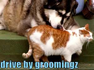 Funny Animal Videos of Cats and Dogs